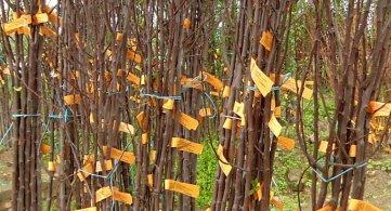 Сваком домаћинству по пет садница дрвећа