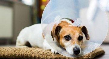 У току акција бесплатне стерилизације паса